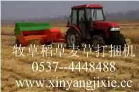 专业生产河南小麦