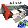 烟台伟明耐用筛网带式蓝莓筛选机